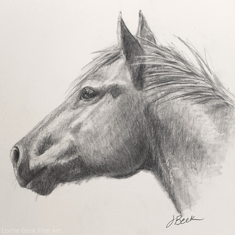 Original pencil drawing horse head study