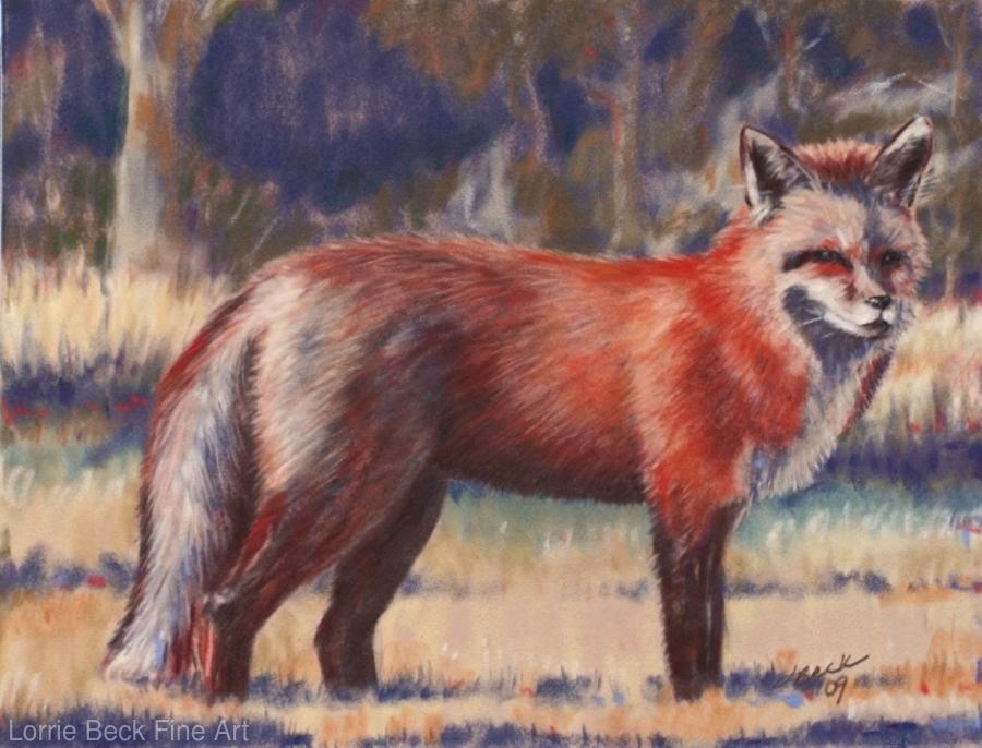 Wildlife Painting In Pastel Red Fox By Lorrie Beck Pastel