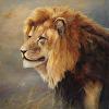 Male Lion (print)