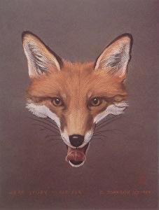 Red Fox Fine Art Print By Carol Brightman Johnson X