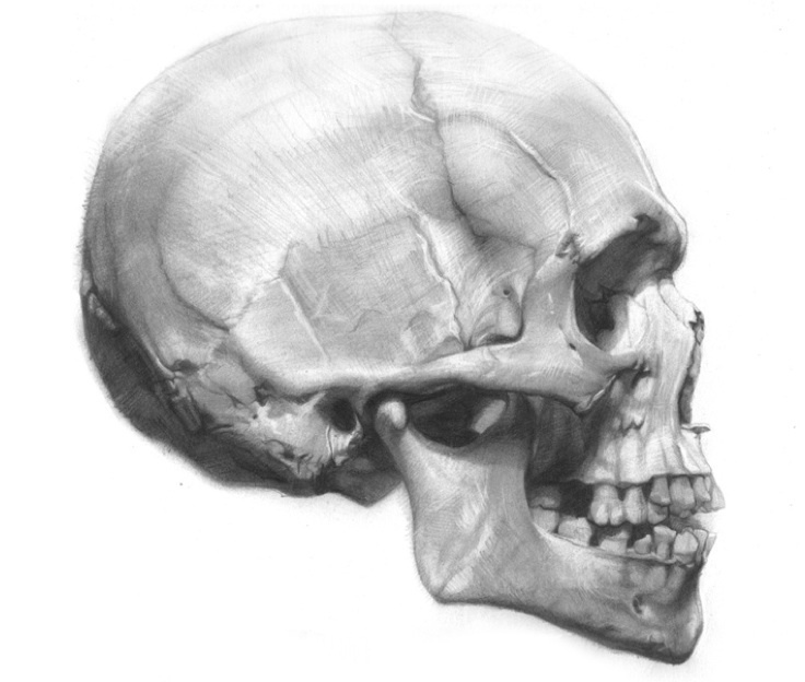 This is a graphic of Punchy Skull Profile Drawing