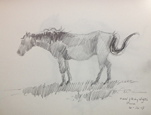 Sketching Mares and Foals-Finding the Gesture and Learning