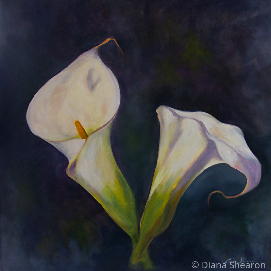 ac47c7f4407 Calla Lily Pair by Diana Shearon Oil ~ 30 x 30
