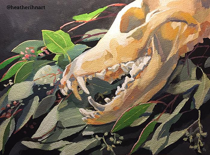 Heather Martin - Work Zoom: Coyote Skull and Eucalyptus