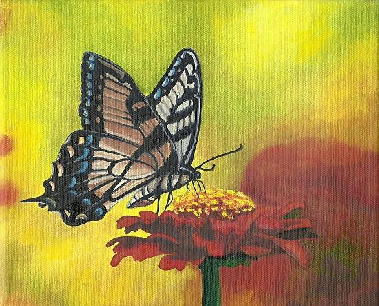 Butterfly in the Sun - Oil