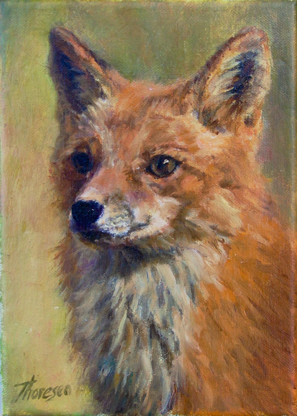 Red Fox Head Study